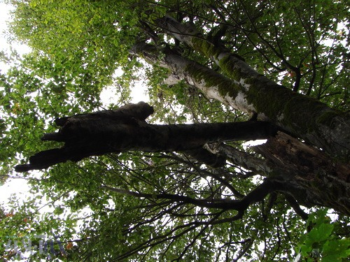 زن بیوه کن در جنگلهای ناو اسالم!