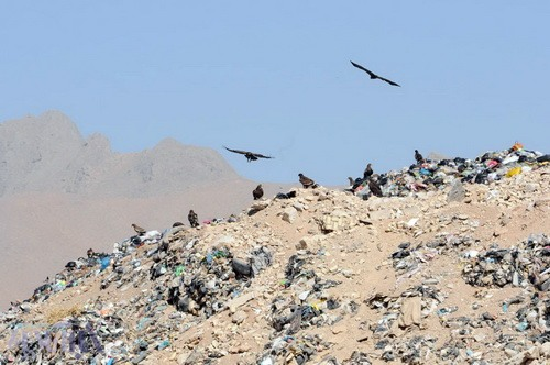 عقاب طلایی بر فراز زبالههای متعفن شهرکرد - 21 مهر 1392 - عکس از سعید یوسف پور
