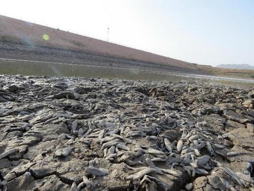 فاجعه مرگ ماهی ها در سد حاجی آباد خراسان جنوبی - تیرماه 1392
