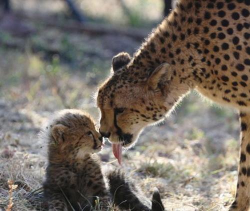 عشق مادر به فرزند ...