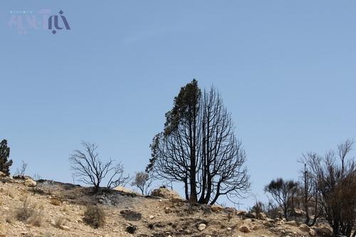 آتش سوزی در کوه تودج استهبان