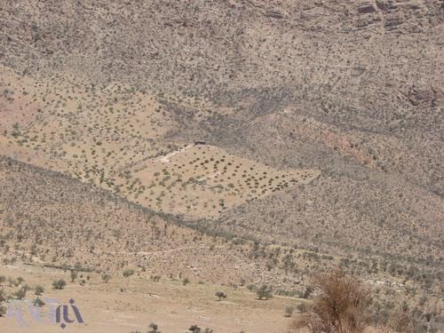 محوطه پاکتراشی شده برای کاشت درخت انجیر در مرکز عکس مشخص است - کوهستان تودج - 29 مرداد 1392