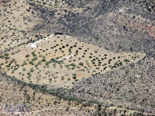 محوطه پاکتراشی شده برای کاشت درخت انجیر در عکس مشخص است - کوهستان تودج - 29 مرداد 1392