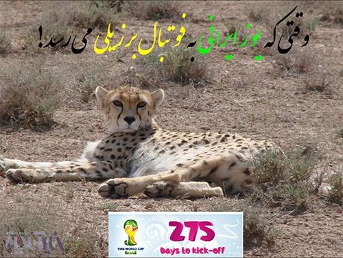 یوزپلنگ ایرانی در میاندشت؛ عکس از محمد درویش