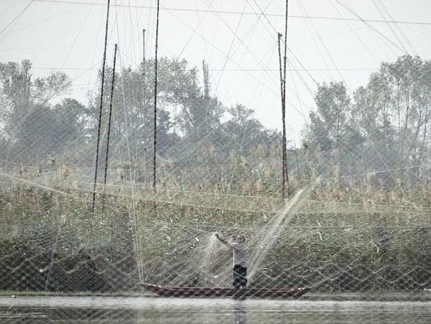 قتل عام پرندگان مهاجر در تالاب فریدونکنار