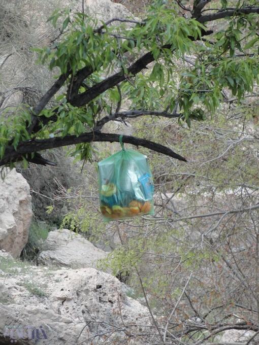 زبالهی آویزان بر درخت بادام در مسجد سنگی ایج