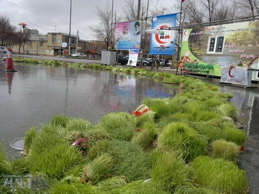 سبزههایی که در سطح شهر بروجن و اطراف آن پخش نمیشوند ...