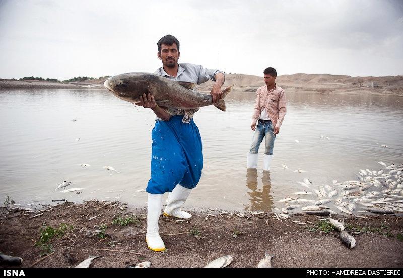 ماهی فشاپویه