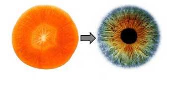 رازی شگفت در شباهت برخی میوه ها به اعضای بدن!
