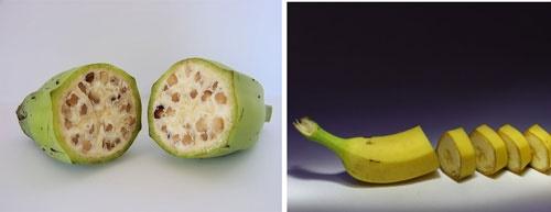 16 2 1 20283016 2 1 113421fff - هندوانه و موز قبلا چه شکلی بودند؟/تصاویری که شاید باورتان نشود