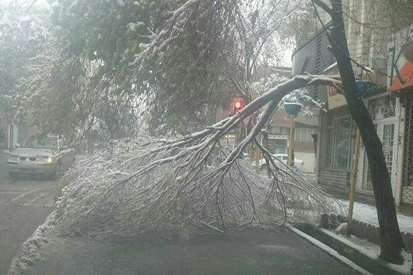 خسارت میلیاردی برف و سرما به درختان در تبریز/ سقوط ۱۶ درخت روی خودروها