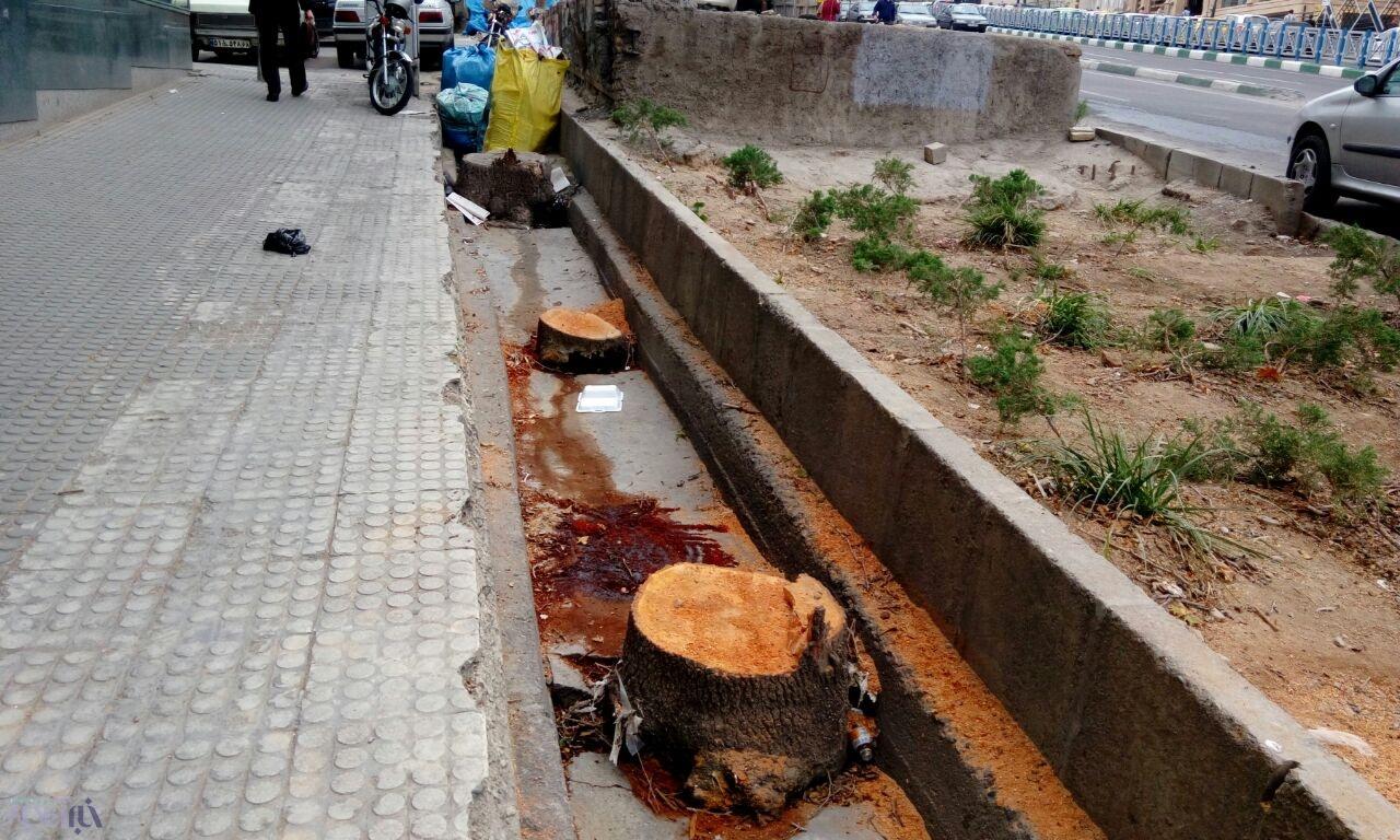 شهرداری چرا درختان خیابان میرزای شیرازی را قطع کرد