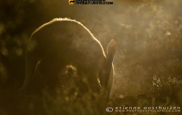 تصاویر ناب نشنالجئوگرافیک از شکوه حیات وحش