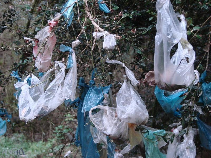 کیسههای پلاستیکی که در جنگلهای تالش نازایی را از بین میبرند!