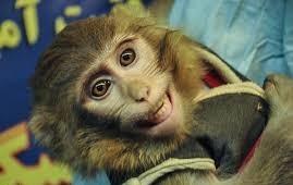 فرستادن میمون به فضا چه سودی برای کشور دارد؟