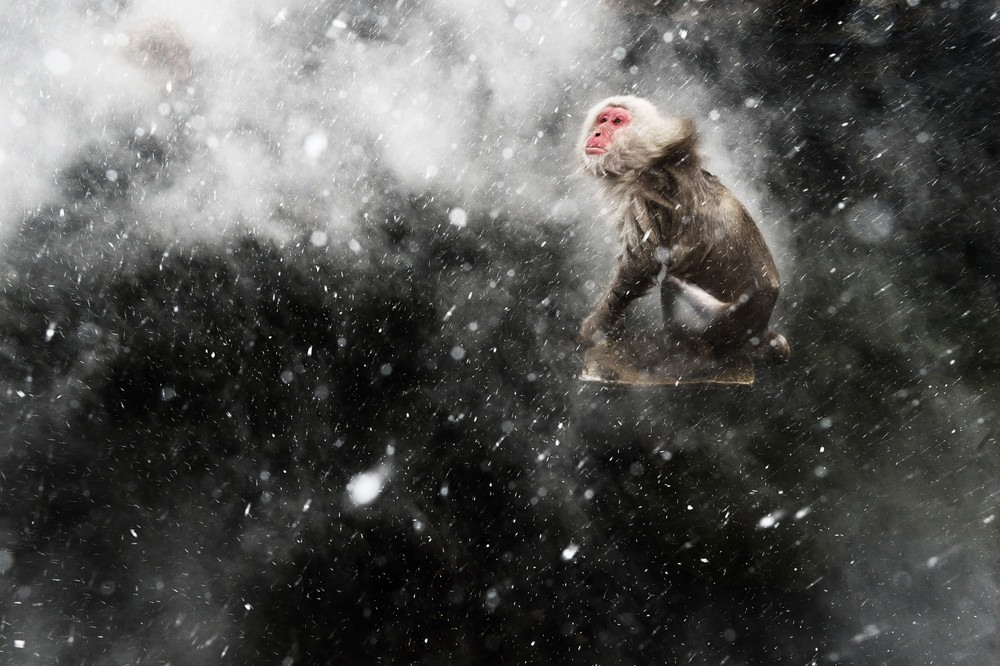 برندگان مسابقه عکاس سال حیاتوحش سال 2013