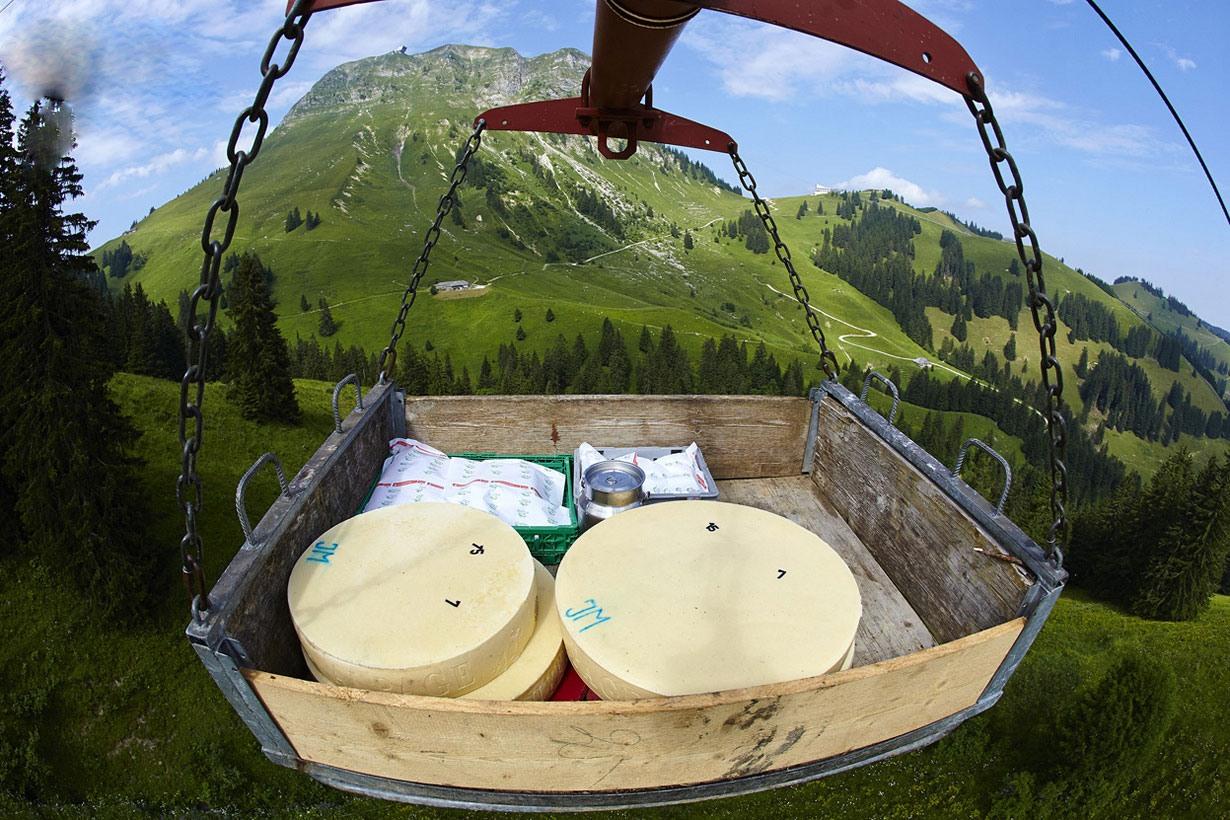 تصاویری از نحوه ساخت معروفترین پنیر سوئیسی جهان: گرویر