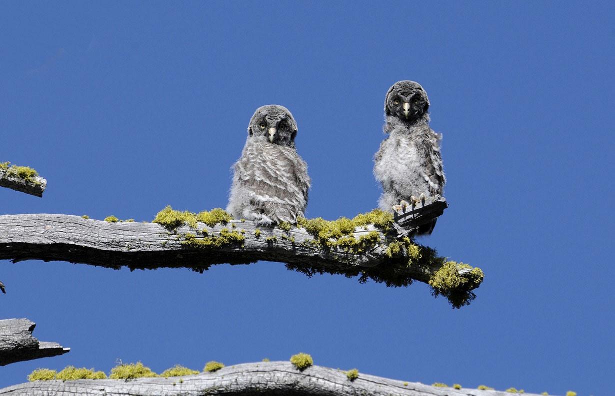 پارک دره یوسیمیتی 123 ساله شد/ زیبایی های وصف ناپذیر آن را تماشا کنید