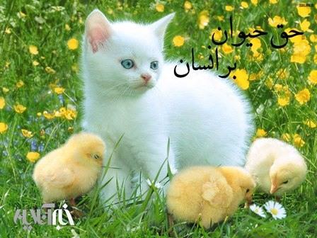 اهمیت حقوق حیوانات در فقه اسلامی / وقتی پیامبر گربه تشنه ای را سیراب کرد و بعد وضو گرفت