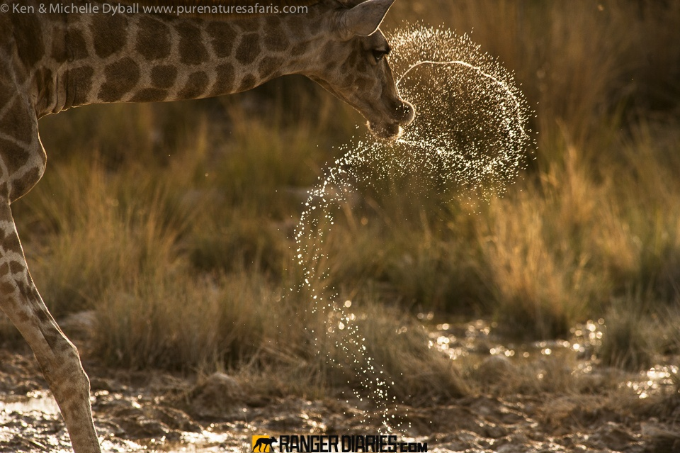 تصاویر بکر نشنالجئوگرافیک از حیاتوحش آفریقا
