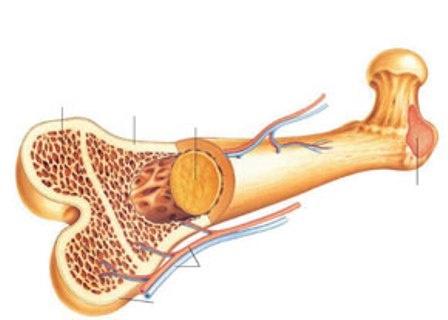 تولید بافت استخوان برای نخستین بار در کشور