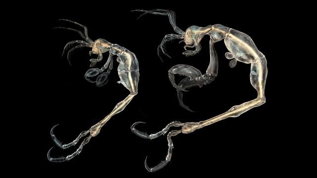 لیروپوس مینوسکولوس، ترسناکترین جانور روی زمین