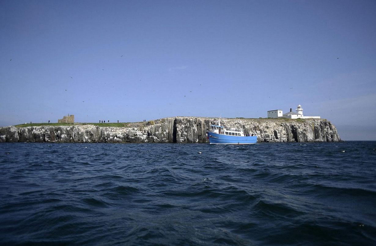 ساکنان اصلی جزیره کارنی را ببینید