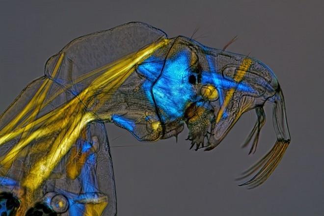 هیجانانگیزترین تصاویر میکروسکوپی سال 2013