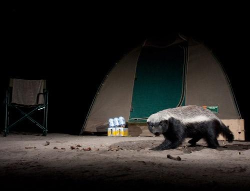 در تاریکی مراقب این حیوانات باشید