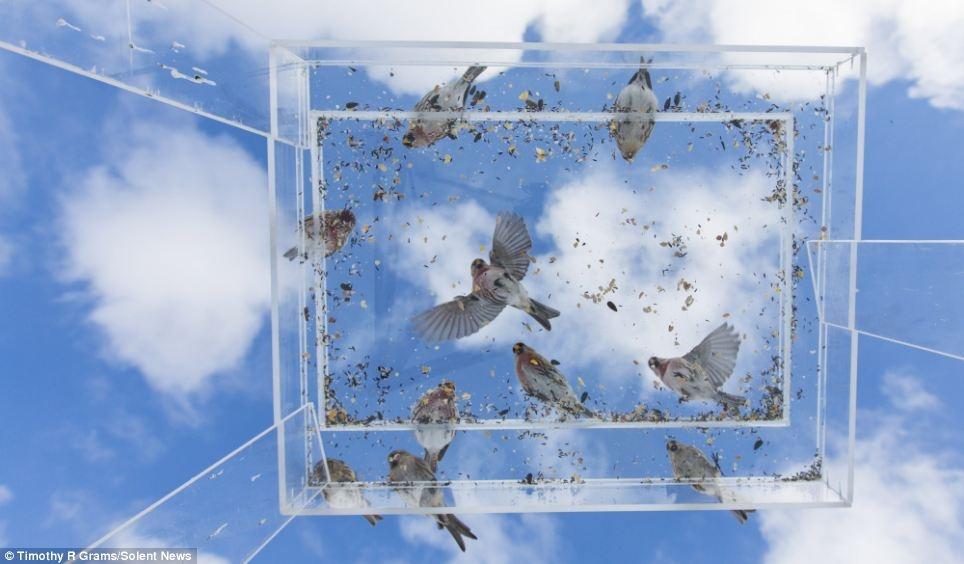 لحظه های ناب از دانه خوردن پرندگان