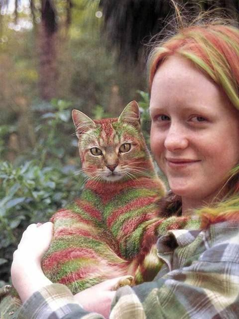 رنگ آمیزی گربه؛ 15 هزار دلار!