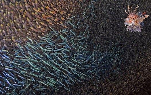 10 عکس حیرتآور از زندگی زیر آب