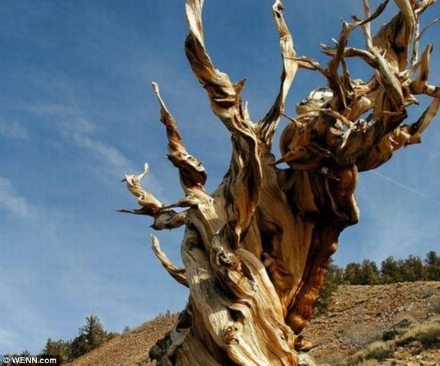 درختانی با شکلهای عجیب و غریب