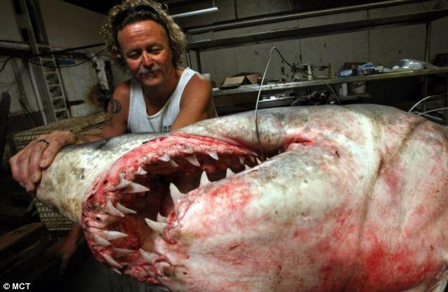 تصاویری از بزرگترین کوسه شکار شده جهان