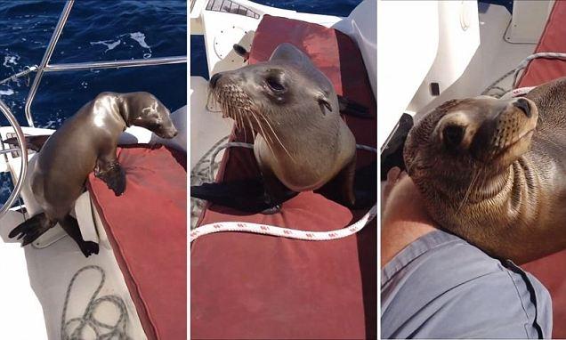 لحظه ورود یک نوزاد شیر دریایی به قایق و نوازش او توسط مسافر مهربان