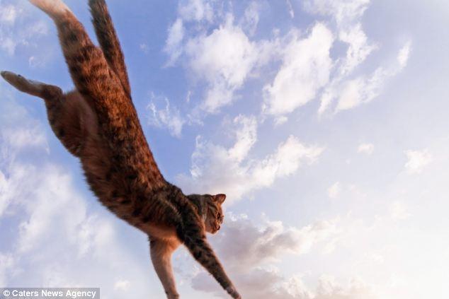 تصاویری از گربه کونگ فوکار در ژاپن
