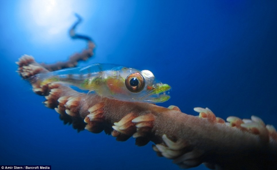 برگزیده تصاویر مسابقه عکاسی زیر آب DEEP