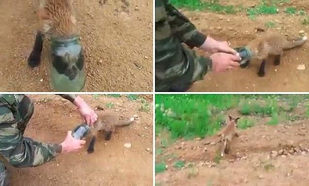 """صحنه جالب کمک خواستن یک روباه  """"بطری به سر"""" از انسان"""