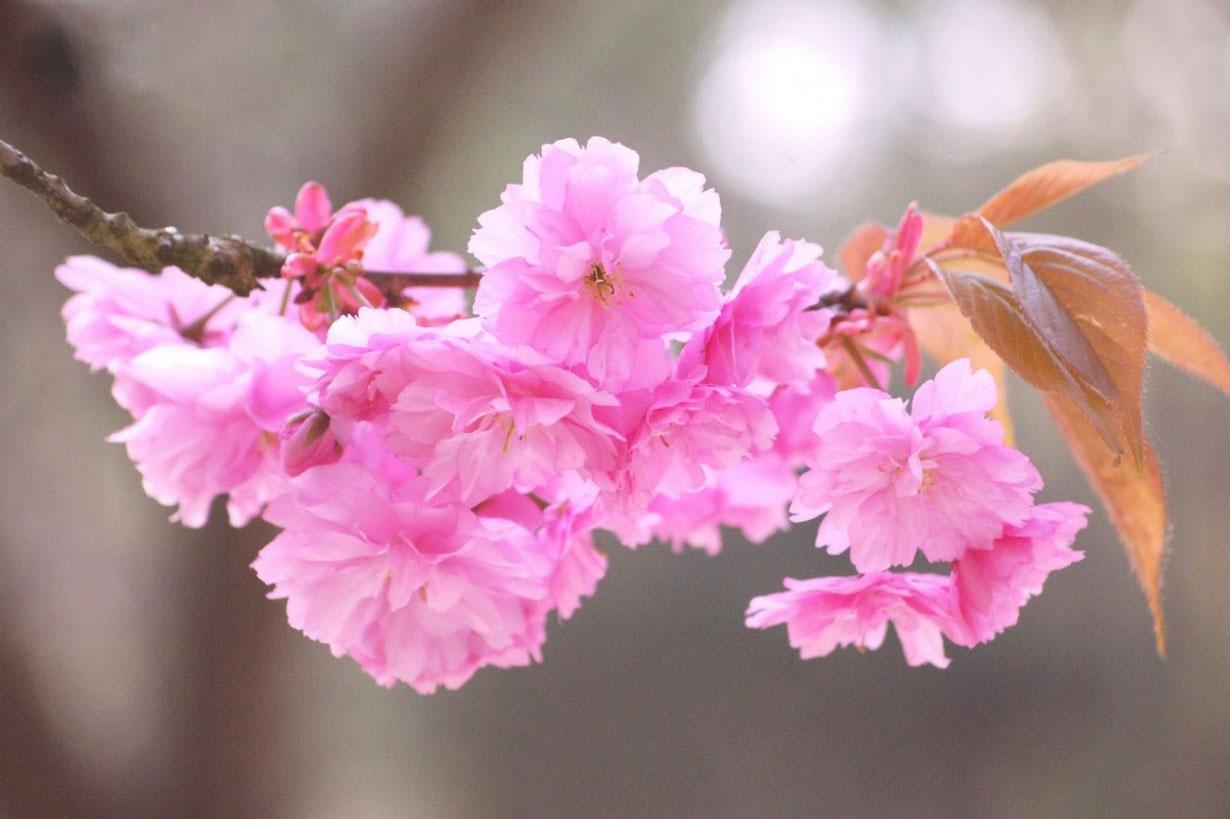 بهشت رنگها در این ده گل زیبا