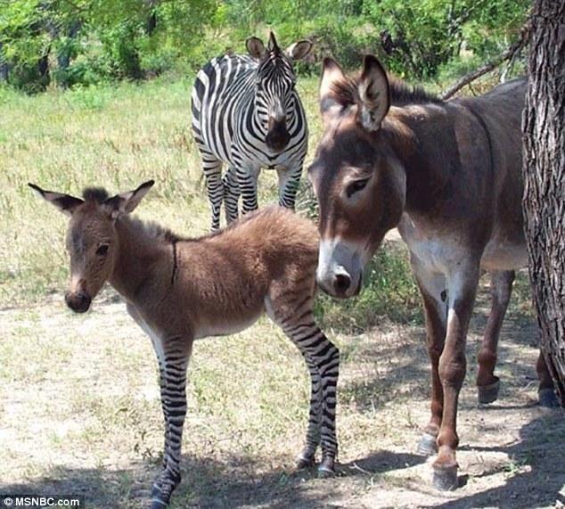 """article 2378631 1AFF3A94000005DC 906 634x571 - تصاویری از یک حیوان بسیار نادر به نام """"زانکی"""""""