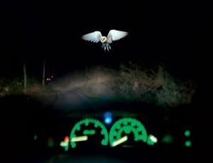 حتی پرندهها هم محدودیت سرعت در جادهها را رعایت میکنند!