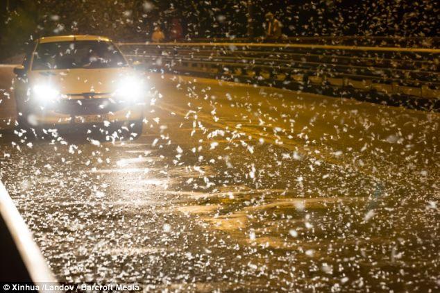 مجارستان و صحنه های وحشتناک میلیون ها حشره دور اتومبیل در حال حرکت