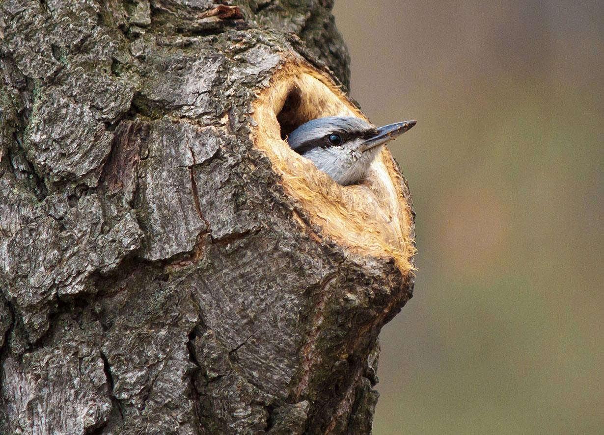 تصاویر منحصر بفرد از لانه ها و آشیانه های پرندگان