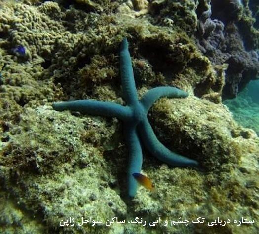 چشم ستاره دریایی هم کشف شد، البته در کف پایش!