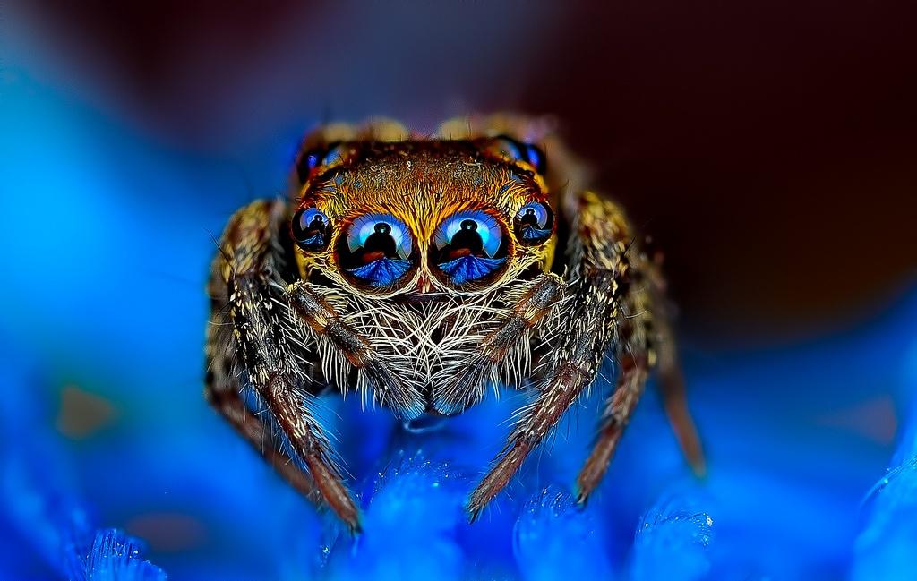 چشمان عنکبوت، برجی از جنس چانه و دیگر تصاویر علمی هفته