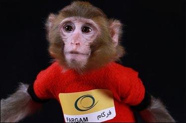 ایجاد نمایشگاه میمونهای فضایی با هدف ترویج علم فضانوردی