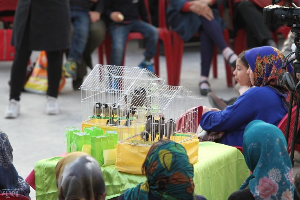 وقتی بلبلها در تهران آزاد می شوند