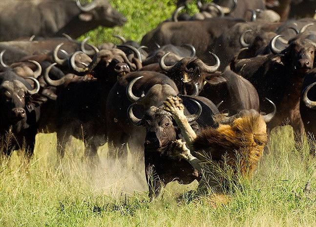 کشتهشدن شکارچی به دست شکارش