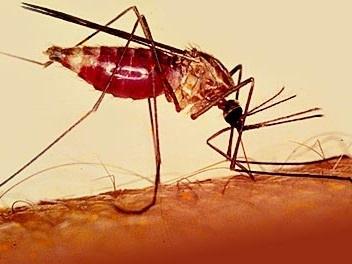 ابولا کم بود، مالاریای میمونی هم رسید
