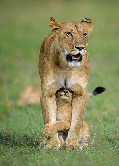 تصاویر حیرت انگیز از حیات وحش
